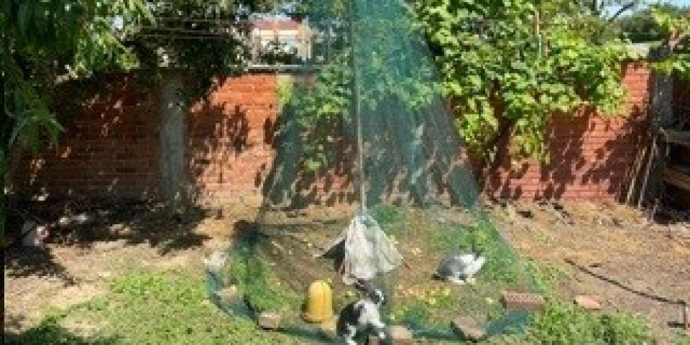 Protective net for rabbits, fowl, chickens and other small poultry