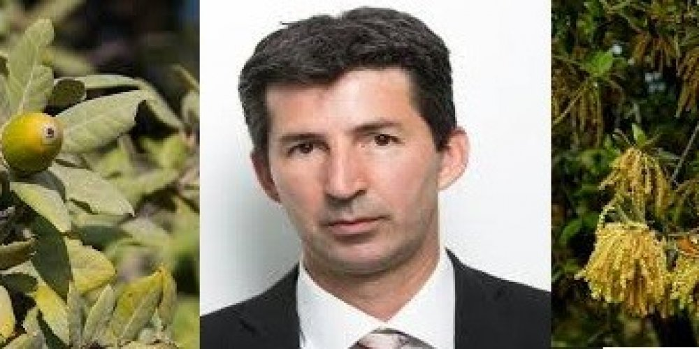 Kud srljaju hrvatske suverenističke guske iz BiH  HRAST-a kroz bošnjačku maglu?