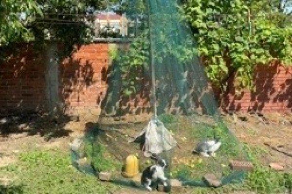 Zaštitna mreža za zečeve, kokoši, piliće i ostalu sitnu perad