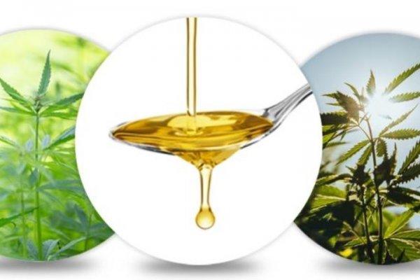 Compra olio di CBD di qualità premium da CBDNOL, un famoso negozio online di CBD