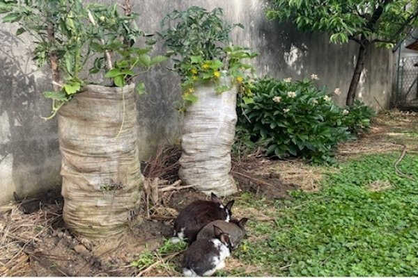 High garden for small yards with small domestic animals