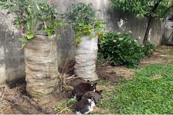 Visoki vrt za mala dvorišta sa sitnim domaćim životinjama